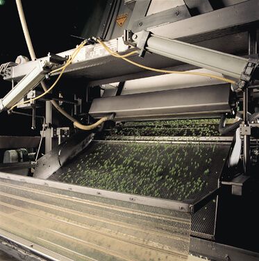 Processing Green Peas with help from a laser sorter