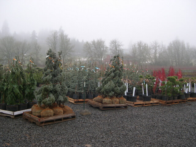 Palletizing plants for shipment